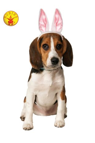 BUNNY EARS PET ACCESSORY
